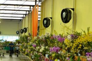 Climatizador para floriculturas